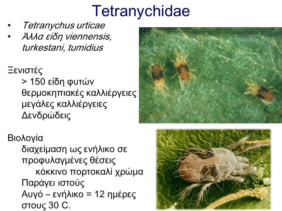 Tetranychidae Tetranychus urticae Άλλα είδη viennensis, turkestani, tumidius Ξενιστές > 150 είδη φυτών θερμοκηπιακές καλλιέργειες μεγάλες καλλιέργειες