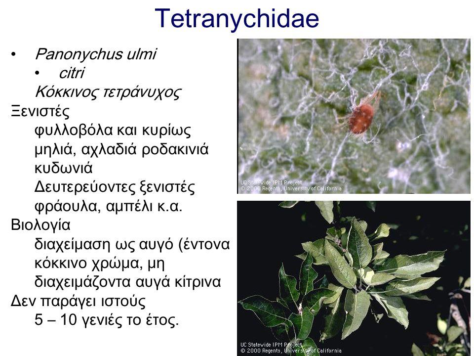 Tetranychidae Panonychus ulmi citri Κόκκινος τετράνυχος Ξενιστές φυλλοβόλα και κυρίως μηλιά, αχλαδιά ροδακινιά κυδωνιά Δευτερεύοντες ξενιστές φράουλα,