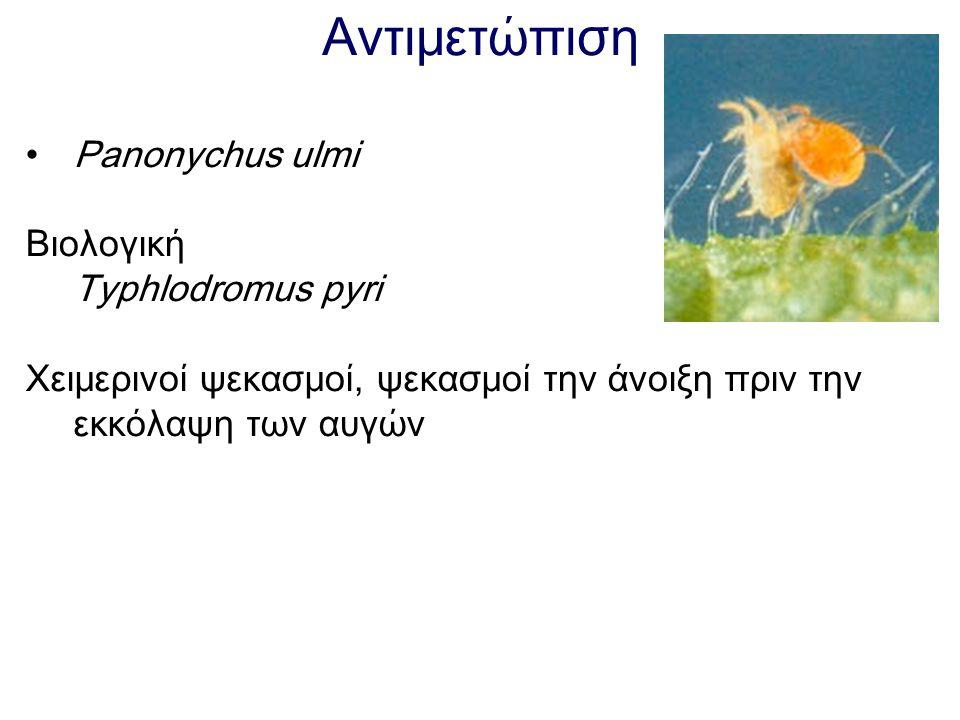 Αντιμετώπιση Panonychus ulmi Βιολογική Typhlodromus pyri Χειμερινοί ψεκασμοί, ψεκασμοί την άνοιξη πριν την εκκόλαψη των αυγών