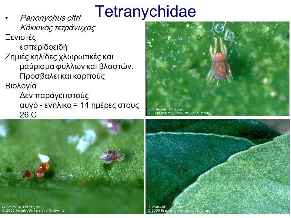 Tetranychidae Panonychus citri Κόκκινος τετράνυχος Ξενιστές εσπεριδοειδή Ζημιές κηλίδες χλωρωτικές και μαύρισμα φύλλων και βλαστών. Προσβάλει και καρπ