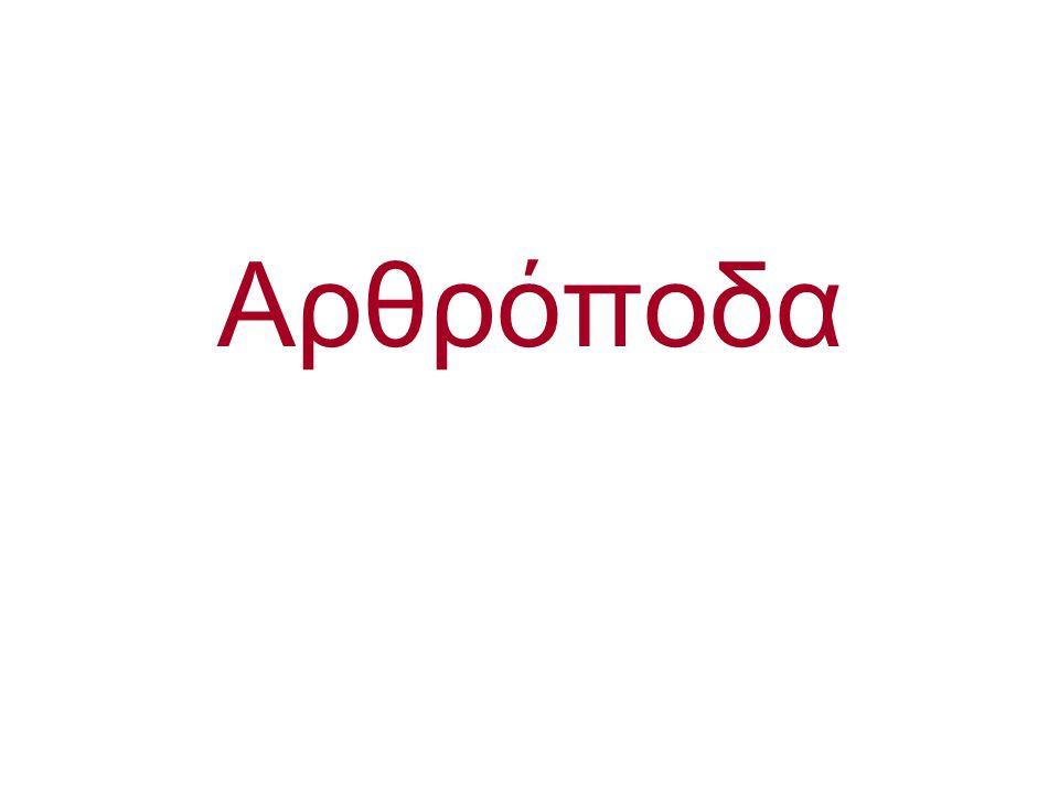 Arthropoda Uniramia [Insecta (Εντομα)]