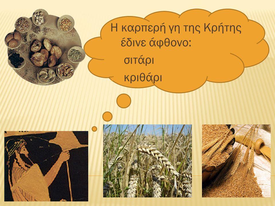Η καρπερή γη της Κρήτης έδινε άφθονο:  σιτάρι  κριθάρι