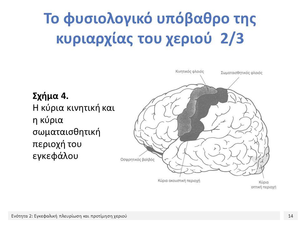 14 Ενότητα 2: Εγκεφαλική πλευρίωση και προτίμηση χεριού Το φυσιολογικό υπόβαθρο της κυριαρχίας του χεριού 2/3 Σχήμα 4. Η κύρια κινητική και η κύρια σω