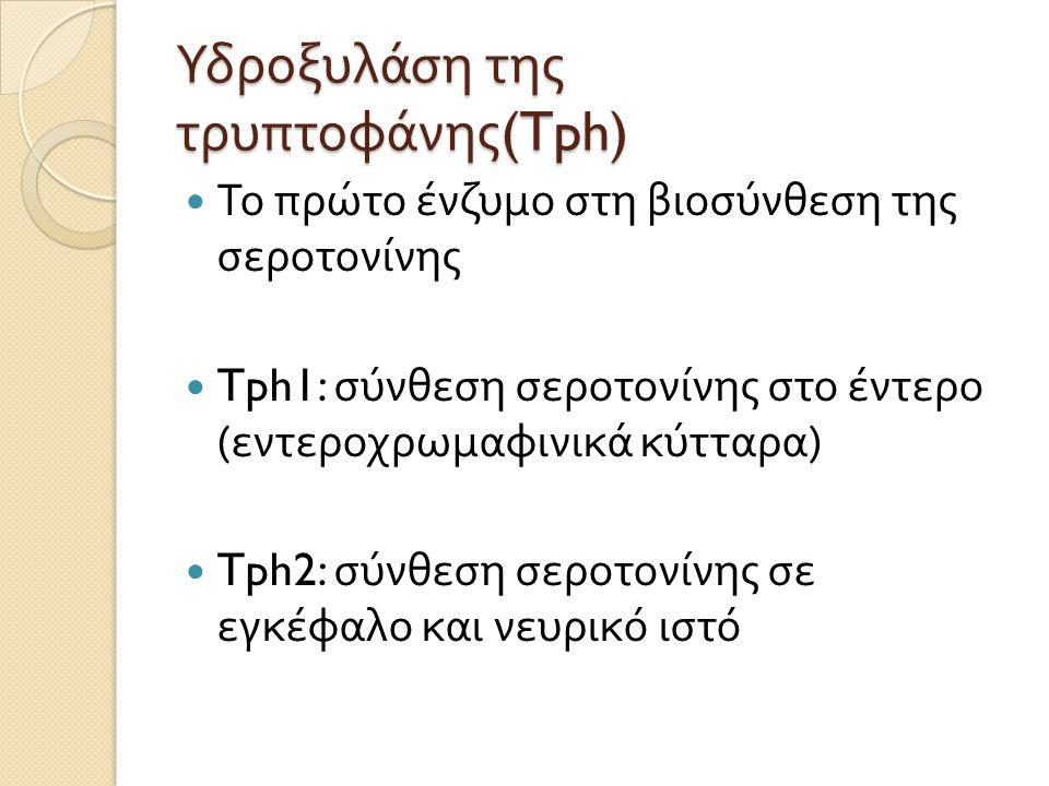Υδροξυλάση της τρυπτοφάνης (Tph) Το πρώτο ένζυμο στη βιοσύνθεση της σεροτονίνης Tph1: σύνθεση σεροτονίνης στο έντερο ( εντεροχρωμαφινικά κύτταρα ) Tph