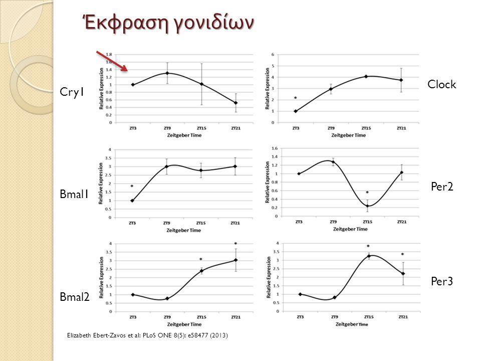 Έκφραση γονιδίων Bmal2 Bmal1 Cry1 Per2 Per3 Clock Elizabeth Ebert-Zavos et al: PLoS ONE 8(5): e58477 (2013)