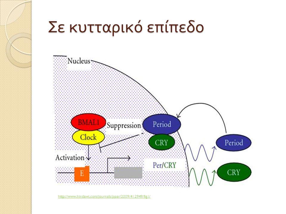 Σε κυτταρικό επίπεδο http://www.hindawi.com/journals/ppar/2009/412949/fig1/
