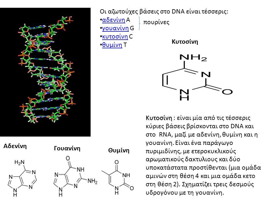 Οι αζωτούχες βάσεις στο DNA είναι τέσσερις: αδενίνη A αδενίνη γουανίνη G γουανίνη κυτοσίνη C κυτοσίνη θυμίνη T θυμίνη πουρίνες Αδενίνη Γουανίνη Θυμίνη Κυτοσίνη Κυτοσίνη Κυτοσίνη : είναι μία από τις τέσσερις κύριες βάσεις βρίσκονται στο DNA και στο RNA, μαζί με αδενίνη, θυμίνη και η γουανίνη.