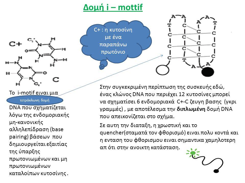 Δομή i – mottif Το i-motif ειναι μια DNA που σχηματίζεται λόγω της ενδομοριακής μη-κανονικής αλληλεπίδραση (base pairing) βάσεων που δημιουργείται εξαιτίας της ύπαρξης πρωτονιωμένων και μη πρωτονιωμένων καταλοίπων κυτοσίνης.
