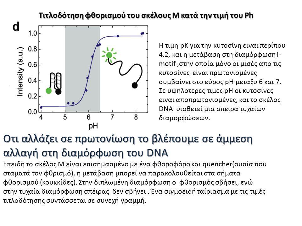 Τιτλοδότηση φθορισμού του σκέλους Μ κατά την τιμή του Ph Επειδή το σκέλος M είναι επισημασμένο με ένα φθοροφόρο και quencher(ουσία που σταματά τον φθρισμό), η μετάβαση μπορεί να παρακολουθείται στα σήματα φθορισμού (κουκκίδες).