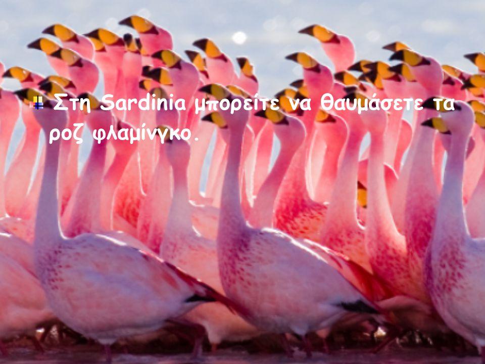 Στη Sardinia μπορείτε να θαυμάσετε τα ροζ φλαμίνγκο.