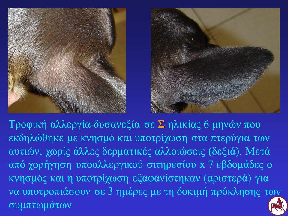 Σ Τροφική αλλεργία-δυσανεξία σε Σ ηλικίας 6 μηνών που εκδηλώθηκε με κνησμό και υποτρίχωση στα πτερύγια των αυτιών, χωρίς άλλες δερματικές αλλοιώσεις (