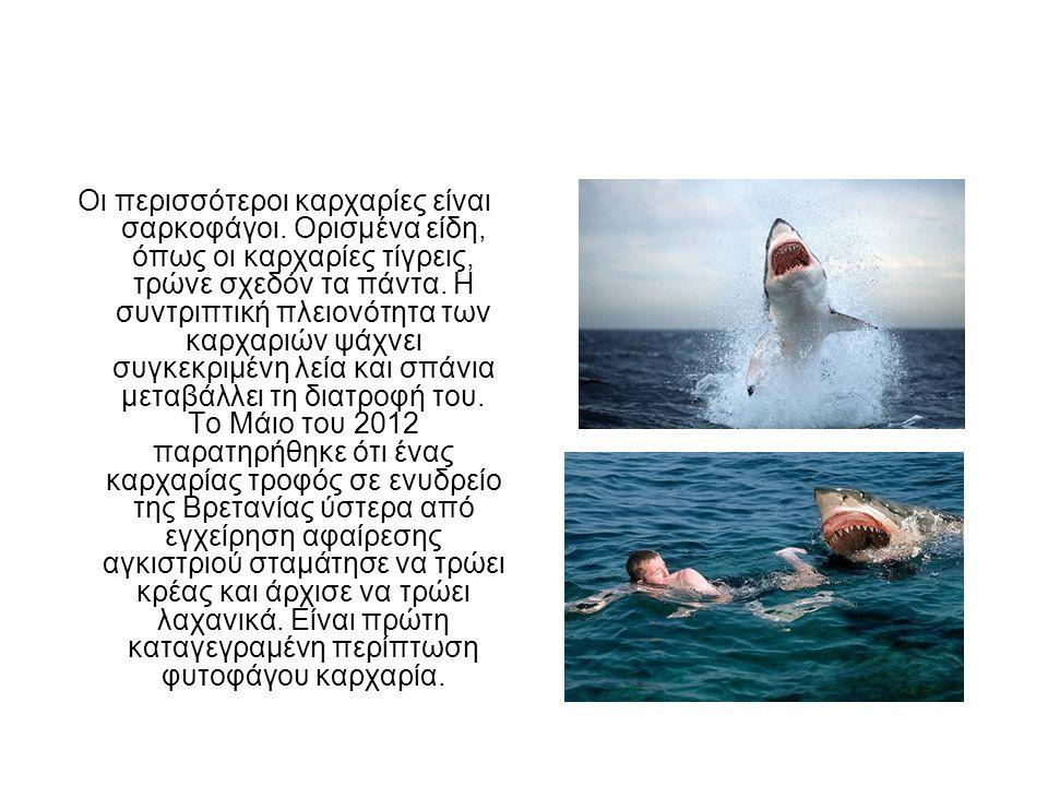 Οι περισσότεροι καρχαρίες είναι σαρκοφάγοι.