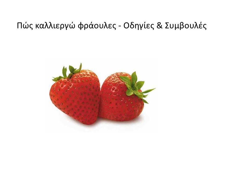 Η φράουλα είναι ένα από τα πιο αγαπημένα, ευαίσθητα και άρα ακριβά φρούτα.
