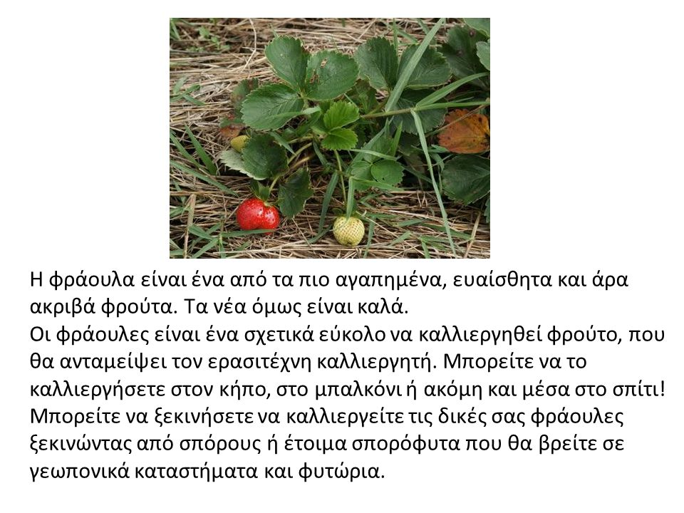 Η φράουλα είναι ένα από τα πιο αγαπημένα, ευαίσθητα και άρα ακριβά φρούτα. Τα νέα όμως είναι καλά. Οι φράουλες είναι ένα σχετικά εύκολο να καλλιεργηθε