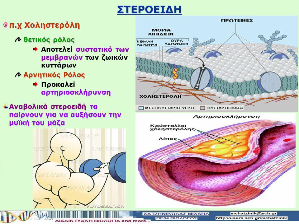 ΣΤΕΡΟΕΙΔΗ π.χ Χοληστερόλη θετικός ρόλος συστατικό των μεμβρανών Αποτελεί συστατικό των μεμβρανών των ζωικών κυττάρων Αρνητικός Ρόλος αρτηριοσκλήρυνση Προκαλεί αρτηριοσκλήρυνση Αναβολικά στεροειδήτα παίρνουν για να αυξήσουν την μυϊκή του μάζα Αναβολικά στεροειδή τα παίρνουν για να αυξήσουν την μυϊκή του μάζα