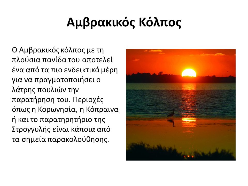 Αμβρακικός Κόλπος Ο Αμβρακικός κόλπος με τη πλούσια πανίδα του αποτελεί ένα από τα πιο ενδεικτικά μέρη για να πραγματοποιήσει ο λάτρης πουλιών την παρατήρηση του.