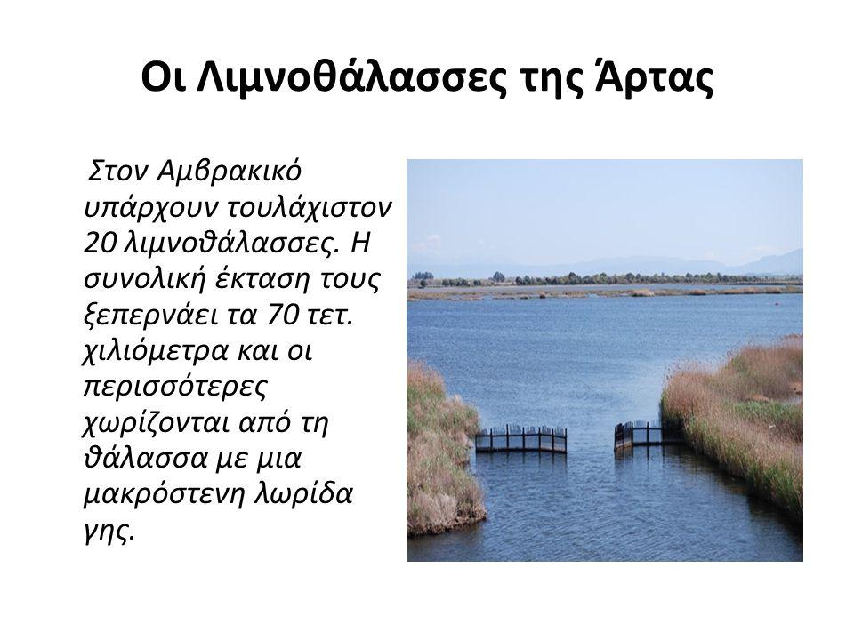 Οι Λιμνοθάλασσες της Άρτας Στον Αμβρακικό υπάρχουν τουλάχιστον 20 λιμνοθάλασσες.