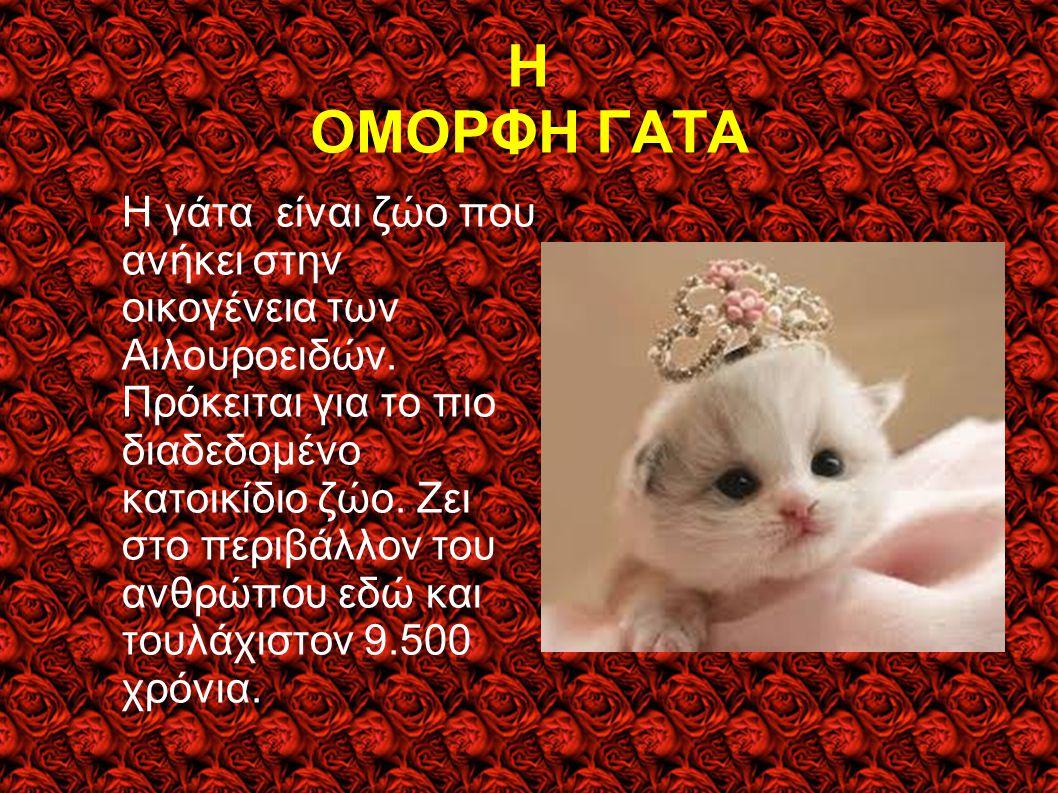 Η ΟΜΟΡΦΗ ΓΑΤΑ Η γάτα είναι ζώο που ανήκει στην οικογένεια των Αιλουροειδών. Πρόκειται για το πιο διαδεδομένο κατοικίδιο ζώο. Ζει στο περιβάλλον του αν