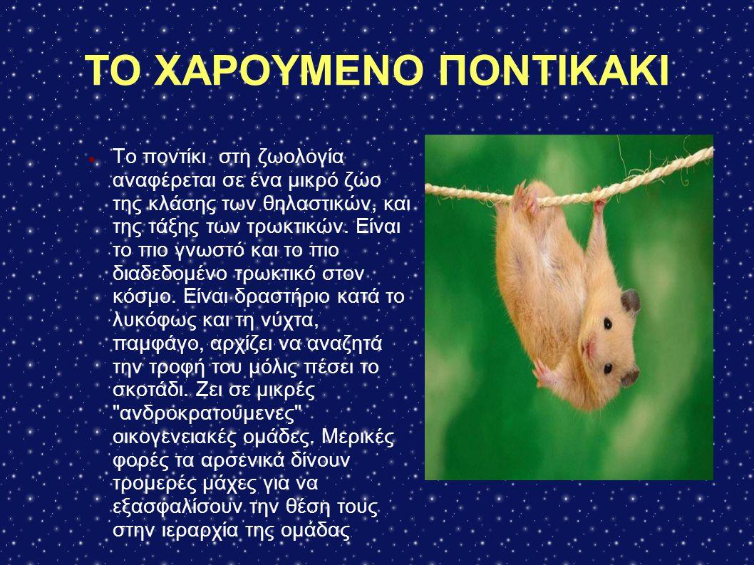 ΤΟ ΧΑΡΟΥΜΕΝΟ ΠΟΝΤΙΚΑΚΙ Το ποντίκι στη ζωολογία αναφέρεται σε ένα μικρό ζώο της κλάσης των θηλαστικών, και της τάξης των τρωκτικών. Είναι το πιο γνωστό