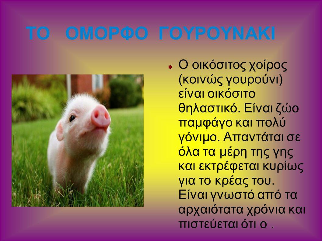 ΤΟ ΟΜΟΡΦΟ ΓΟΥΡΟΥΝΑΚΙ Ο οικόσιτος χοίρος (κοινώς γουρούνι) είναι οικόσιτο θηλαστικό. Είναι ζώο παμφάγο και πολύ γόνιμο. Απαντάται σε όλα τα μέρη της γη