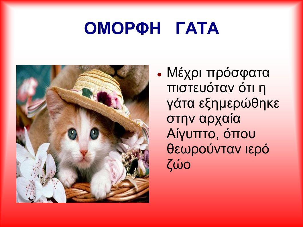 ΟΜΟΡΦΗ ΓΑΤΑ Μέχρι πρόσφατα πιστευόταν ότι η γάτα εξημερώθηκε στην αρχαία Αίγυπτο, όπου θεωρούνταν ιερό ζώο