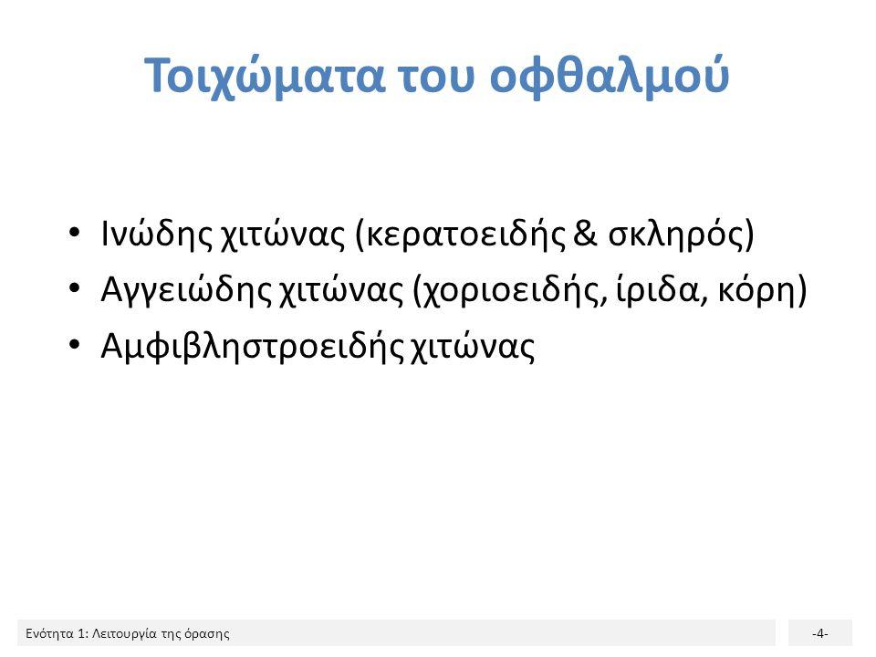 Ενότητα 1: Λειτουργία της όρασης-4- Τοιχώματα του οφθαλμού Ινώδης χιτώνας (κερατοειδής & σκληρός) Αγγειώδης χιτώνας (χοριοειδής, ίριδα, κόρη) Αμφιβλησ
