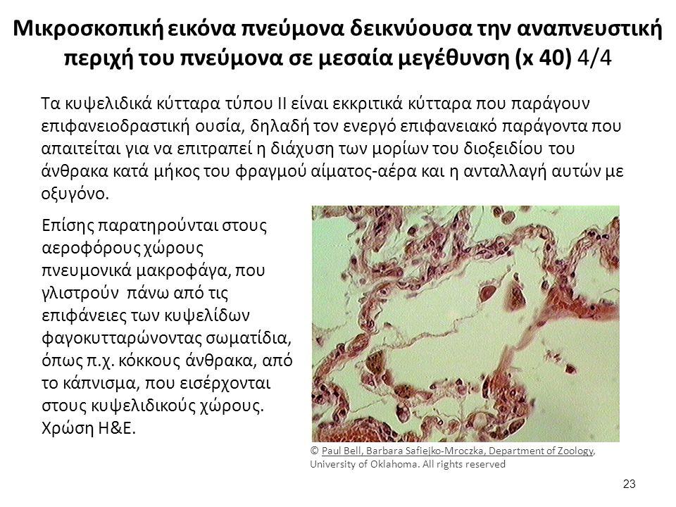 Μικροσκοπική εικόνα πνεύμονα δεικνύουσα την αναπνευστική περιχή του πνεύμονα σε μεσαία μεγέθυνση (x 40) 4/4 Τα κυψελιδικά κύτταρα τύπου II είναι εκκριτικά κύτταρα που παράγουν επιφανειοδραστική ουσία, δηλαδή τον ενεργό επιφανειακό παράγοντα που απαιτείται για να επιτραπεί η διάχυση των μορίων του διοξειδίου του άνθρακα κατά μήκος του φραγμού αίματος-αέρα και η ανταλλαγή αυτών με οξυγόνο.