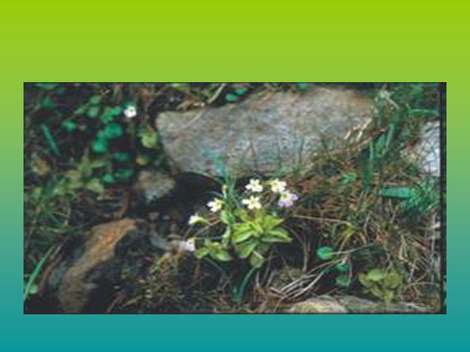 ΚΥΡΙΟΤΕΡΕΣ ΑΝΘΡΩΠΟΓΕΝΕΙΣ ΑΙΤΙΕΣ ΠΟΥ ΕΠΗΡΕΑΖΟΥΝ ΤΗΝ ΒΙΟΠΟΙΚΙΛΟΤΗΤΑ 1) Χρήση φυτοφαρμάκων, παρασιτοκτόνων & λιπασμάτων 2) Λαθροθηρία και υπερβολικό κυνήγι 3)Η υπερεκμετάλλευση φυσικών πόρων και ειδών - Υπεραλίευση 4) Καταστροφή της φυσικής βλάστησης 5) Ατμοσφαιρική ρύπανση 6) Καταστροφή υδροβιοτόπων 7) Αλλοίωση του τόπου διαμονής 8) Συγκέντρωση του πληθυσμού στις πόλεις 9) Υπερπληθυσμός 10) Αυξημένη διάβρωση των εδαφών 11) Τουρισμός και βιομηχανική ανάπτυξη 12) Κλιματικές αλλαγές 13) Πόλεμοι 14) Δημιουργία γενετικά τροποποιημένων ειδών 15) Αυξανόμενη φτώχεια 16) Εισαγωγή ξενικών ειδών.