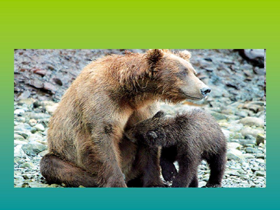 ΕΞΑΦΑΝΙΣΗ ΤΩΝ ΕΙΔΩΝ Η διεθνής ένωση για τη διατήρηση της φύσης και των φυσικών πόρων έχει κατηγοριοποιήσει τα είδη με βάση τον βαθμό κινδύνου που διατρέχουν.