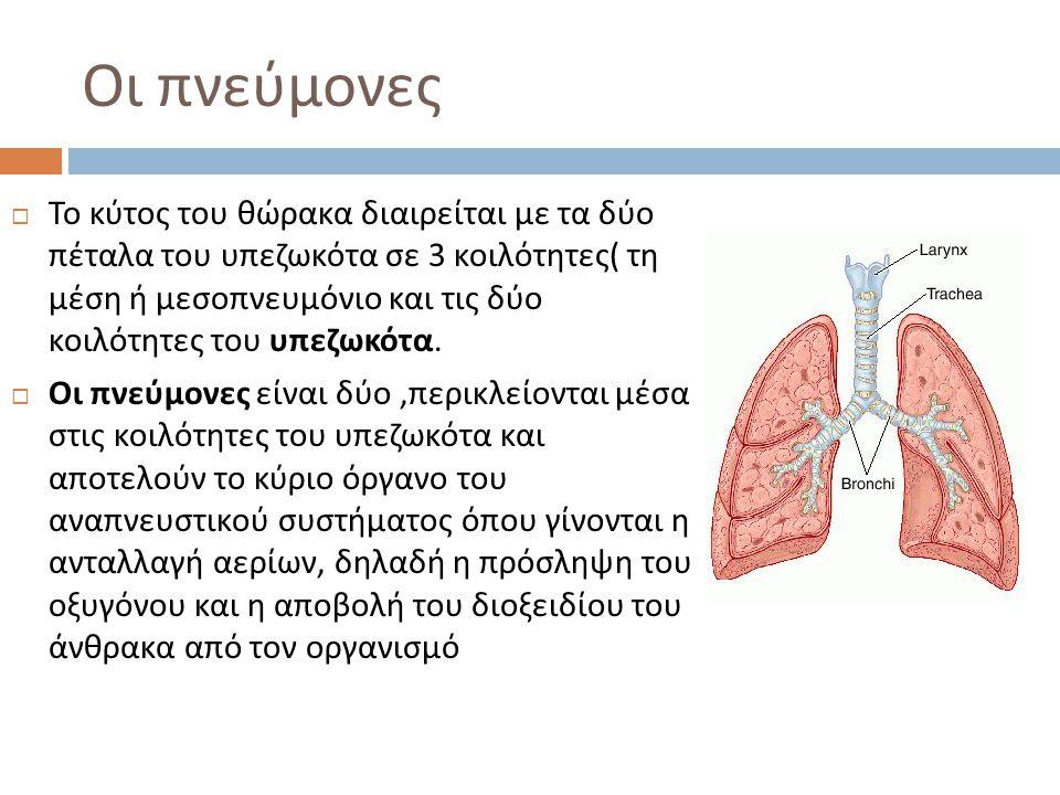 Οι πνεύμονες  Το κύτος του θώρακα διαιρείται με τα δύο πέταλα του υπεζωκότα σε 3 κοιλότητες ( τη μέση ή μεσοπνευμόνιο και τις δύο κοιλότητες του υπεζ