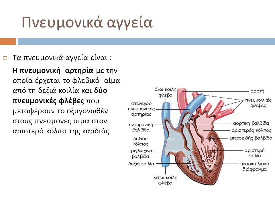 Πνευμονικά αγγεία  Τα πνευμονικά αγγεία είναι : Η πνευμονική αρτηρία με την οποία έρχεται το φλεβικό αίμα από τη δεξιά κοιλία και δύο πνευμονικές φλέ
