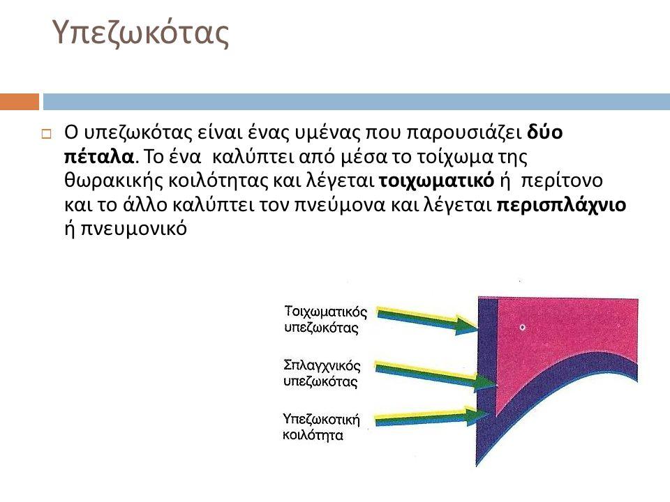 Υπεζωκότας  Ο υπεζωκότας είναι ένας υμένας που παρουσιάζει δύο πέταλα. Το ένα καλύπτει από μέσα το τοίχωμα της θωρακικής κοιλότητας και λέγεται τοιχω
