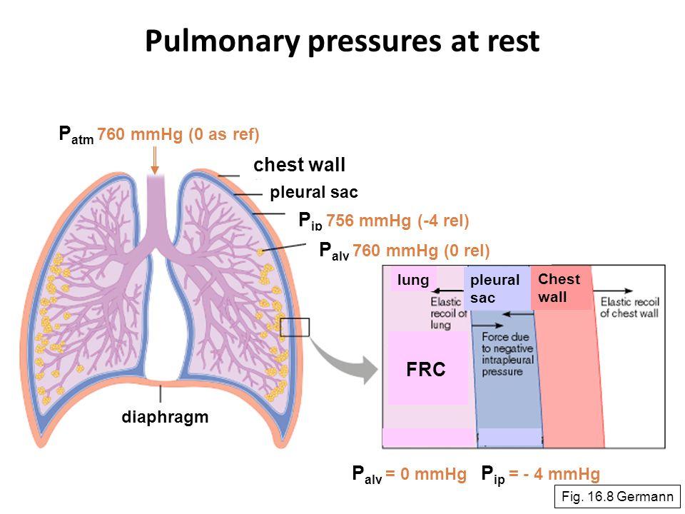 44 diaphragm pleural sac P atm 760 mmHg (0 as ref) P ip 756 mmHg (-4 rel) P alv 760 mmHg (0 rel) lung pleural sac Chest wall P ip = - 4 mmHg P alv = 0