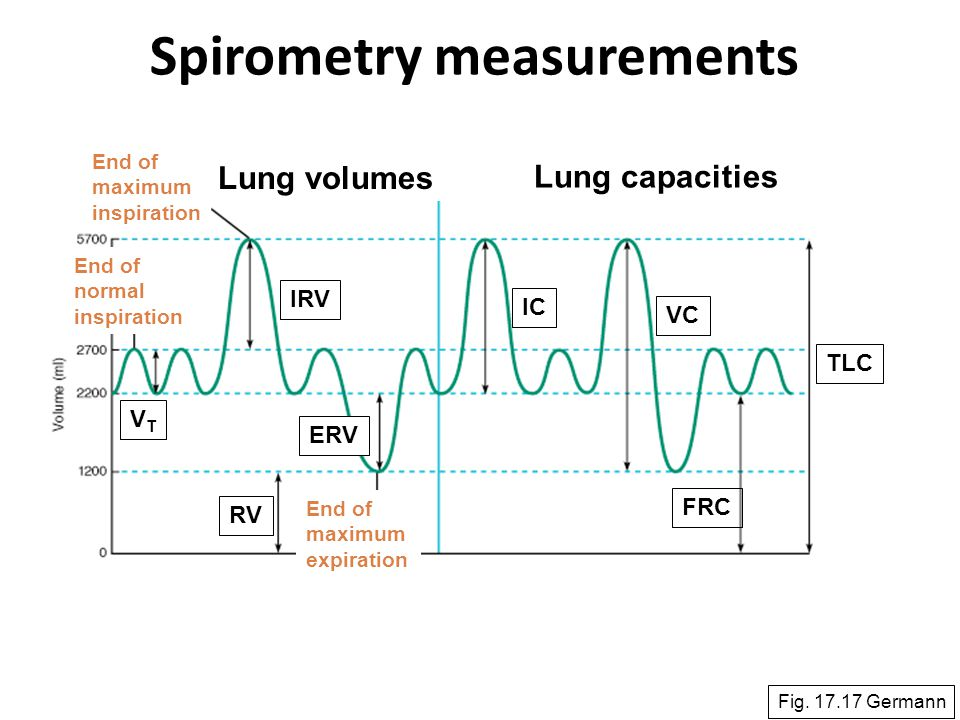 57 Spirometry measurements Fig. 17.17 Germann Lung volumes Lung capacities VTVT IRV ERV RV IC VC FRC TLC End of maximum expiration End of maximum insp