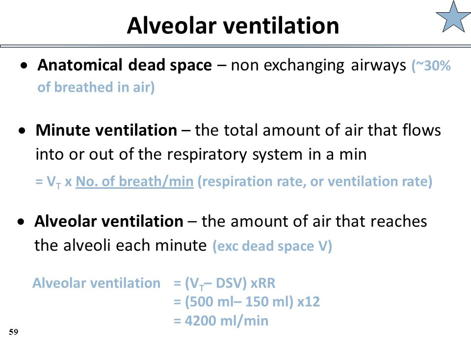 59 Alveolar ventilation  Anatomical dead space – non exchanging airways (~30% of breathed in air)  Minute ventilation – the total amount of air that
