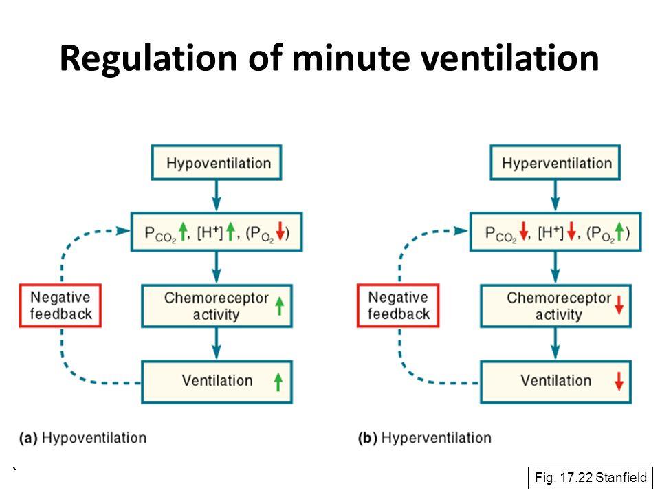 65 Regulation of minute ventilation Fig. 17.22 Stanfield