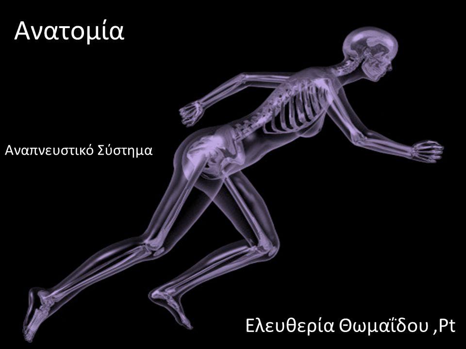 dsfsf Ανατομία Ελευθερία Θωμαΐδου,Pt Αναπνευστικό Σύστημα