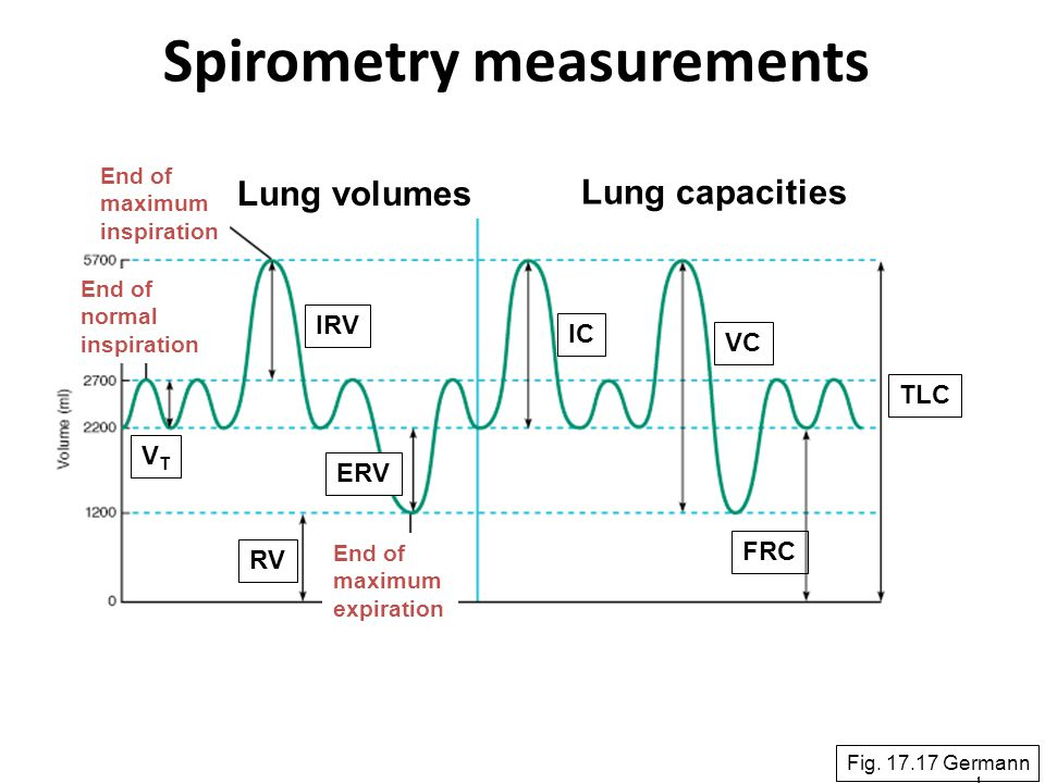 24 Spirometry measurements Fig. 17.17 Germann Lung volumes Lung capacities VTVT IRV ERV RV IC VC FRC TLC End of maximum expiration End of maximum insp