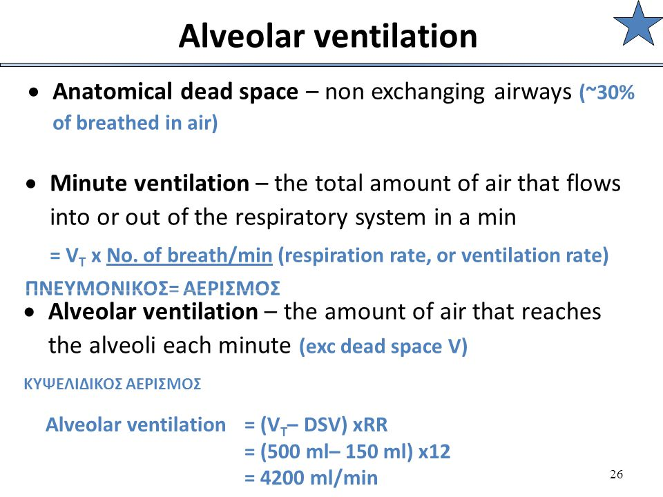 26 Alveolar ventilation  Anatomical dead space – non exchanging airways (~30% of breathed in air)  Minute ventilation – the total amount of air that