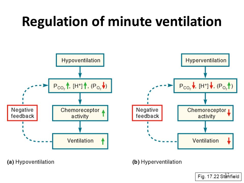 32 Regulation of minute ventilation Fig. 17.22 Stanfield