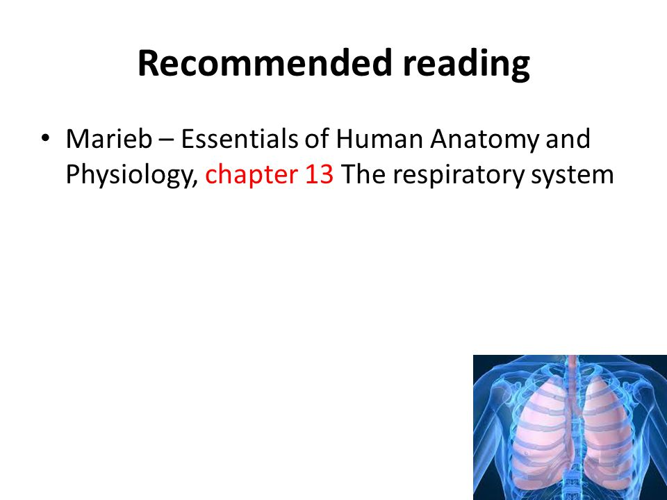 Recommended reading Marieb – Essentials of Human Anatomy and Physiology, chapter 13 The respiratory system