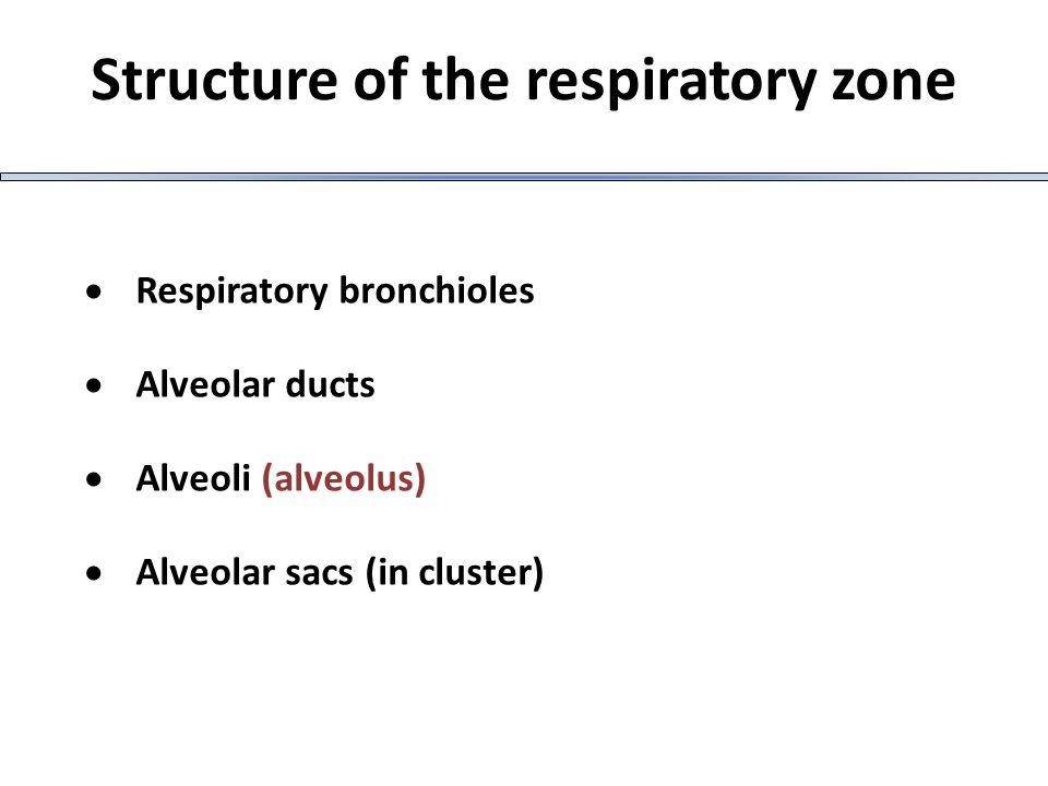 ΝΟΣΗΜΑΤΑ ΑΝΑΠΝΕΥΣΤΙΚΟΎ ΣΥΣΤΗΜΑΤΟΣ Αναπνευστική ανεπάρκεια Είναι η κατάσταση εκείνη κατά την οποία δεν επιτελείται επαρκής ανταλλαγή αναπνευστικών αερίων με αποτέλεσμα να η PO2( υποξαιμία)και να η PCO2 στο αρτηριακό αίμα( υπερκαπνία) Όταν η PO2< 60mmHg η PCO2 > 50 mm Hg