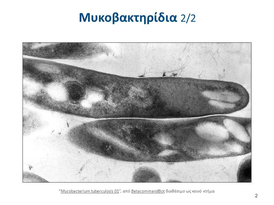 """Μυκοβακτηρίδια 2/2 """"Mycobacterium tuberculosis 01"""", από BetacommandBot διαθέσιμο ως κοινό κτήμαMycobacterium tuberculosis 01BetacommandBot 2"""