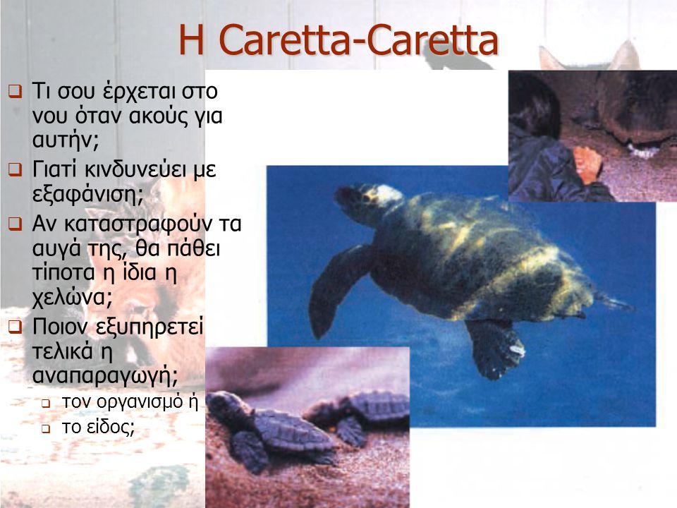 Η Caretta-Caretta  Τι σου έρχεται στο νου όταν ακούς για αυτήν;  Γιατί κινδυνεύει με εξαφάνιση;  Αν καταστραφούν τα αυγά της, θα πάθει τίποτα η ίδι