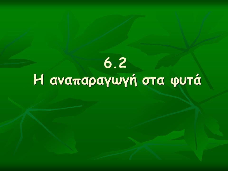 6.2 Η αναπαραγωγή στα φυτά