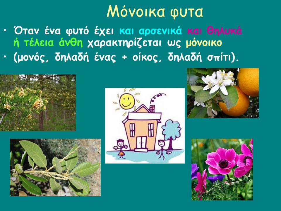 Μόνοικα φυτα Όταν ένα φυτό έχει και αρσενικά και θηλυκά ή τέλεια άνθη χαρακτηρίζεται ως μόνοικο (μονός, δηλαδή ένας + οίκος, δηλαδή σπίτι).