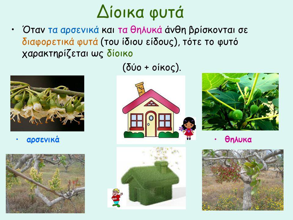 Δίοικα φυτά Όταν τα αρσενικά και τα θηλυκά άνθη βρίσκονται σε διαφορετικά φυτά (του ίδιου είδους), τότε το φυτό χαρακτηρίζεται ως δίοικο (δύο + οίκος)