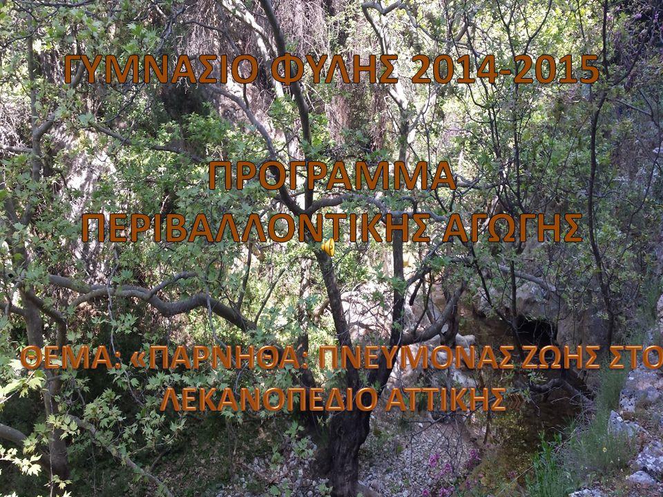 Κλαδοπλέγματα στην περιοχή του Ξενία