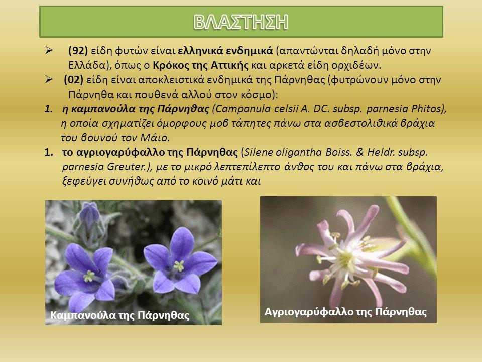  (92) είδη φυτών είναι ελληνικά ενδημικά (απαντώνται δηλαδή μόνο στην Ελλάδα), όπως ο Κρόκος της Αττικής και αρκετά είδη ορχιδέων.  (02) είδη είναι