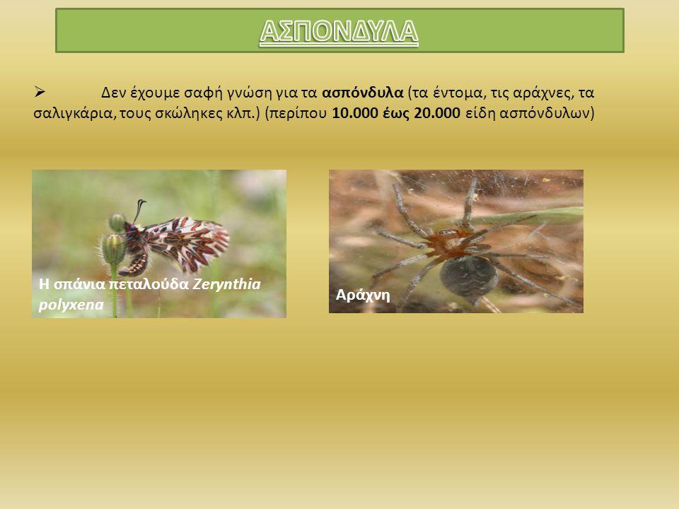  Δεν έχουμε σαφή γνώση για τα ασπόνδυλα (τα έντομα, τις αράχνες, τα σαλιγκάρια, τους σκώληκες κλπ.) (περίπου 10.000 έως 20.000 είδη ασπόνδυλων) Η σπά